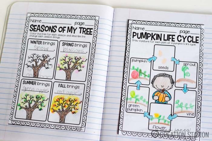 Science Notebook Pumpkin Life Cycle - MJCS