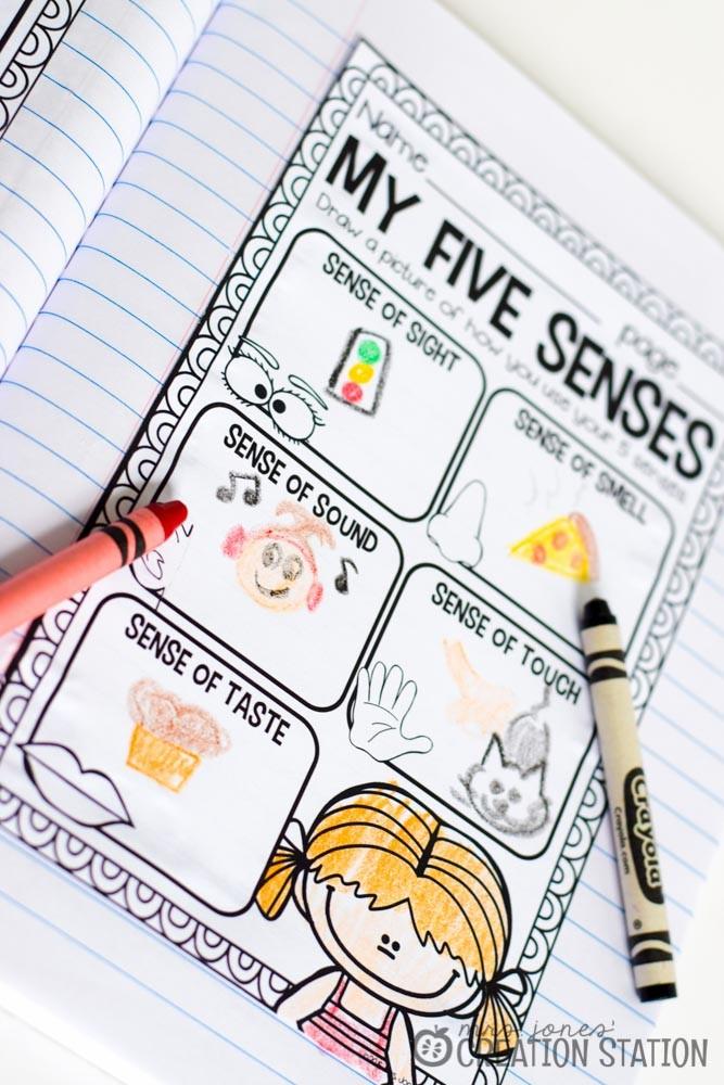 Science Notebook Five Senses - MJCS