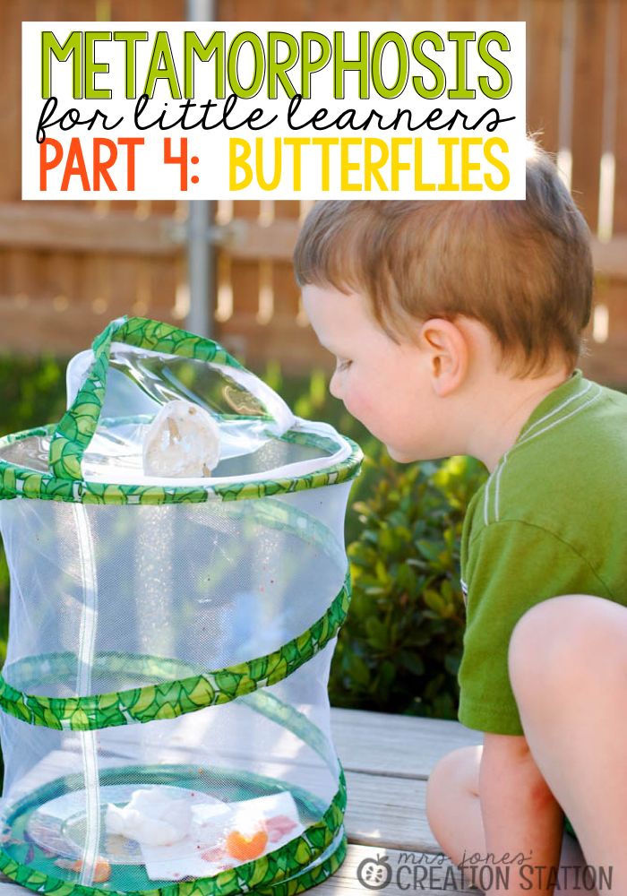 Life Cycle of a Butterfly: Part 4 - MJCS
