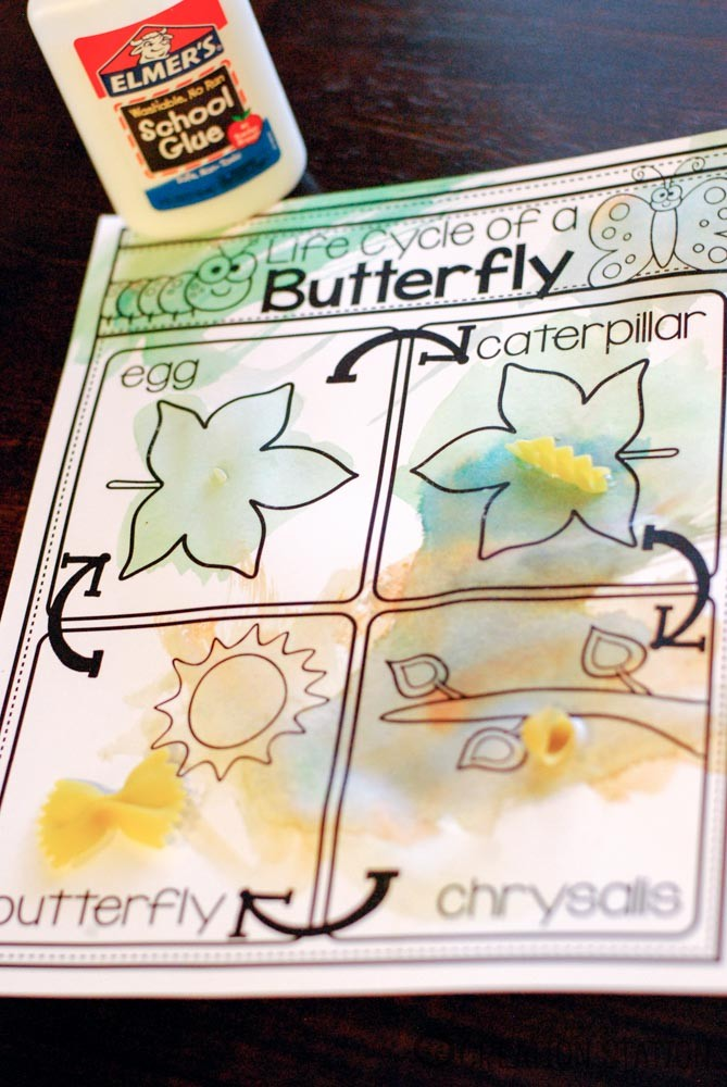 Life Cycle of a Butterfly: Part 3 - MJCS