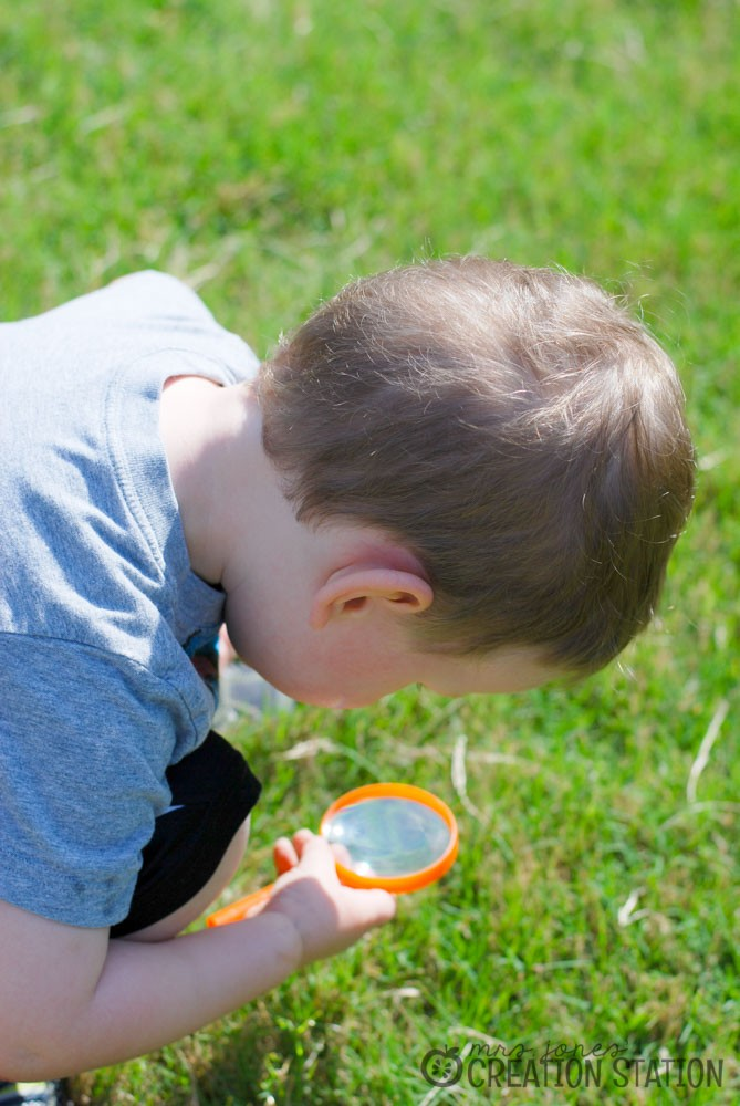 Science in your own backyard with a backyard bug hunt - MJCS
