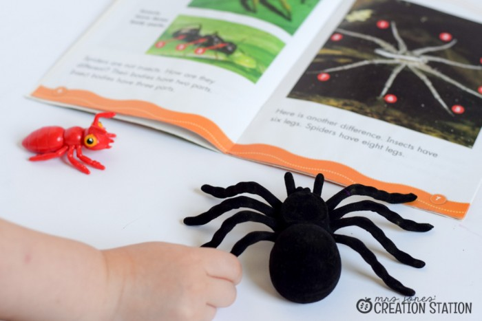 Spider Science Activities for Little Learners