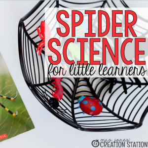 Spider Science for Little Learners