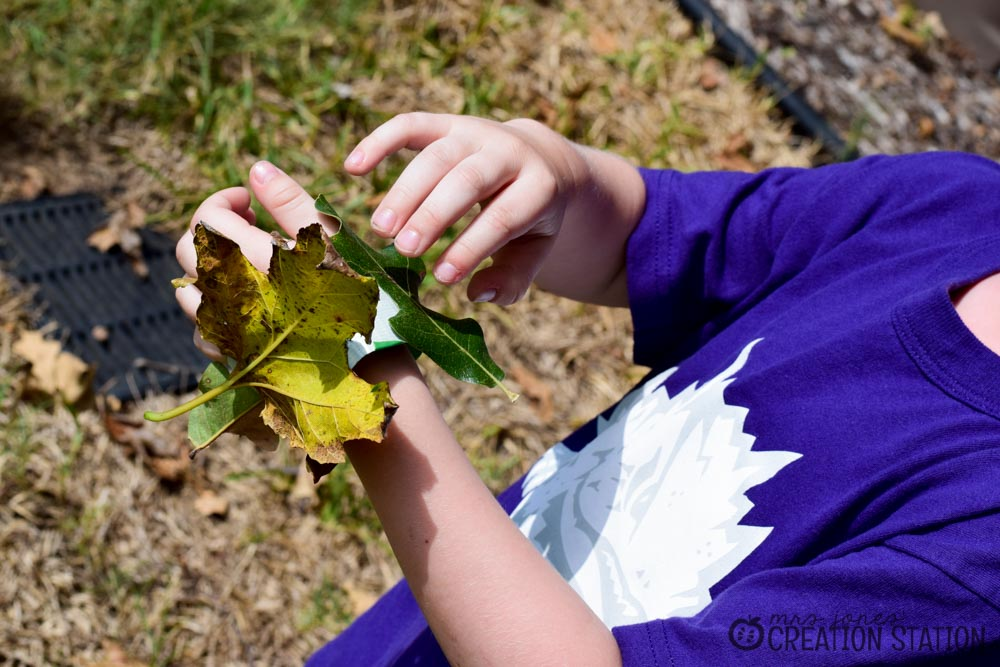 All About My Leaf Science Activity - Mrs. Jones' Creation ...
