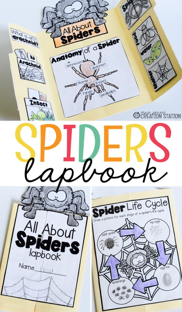 Spider Lapbook Science