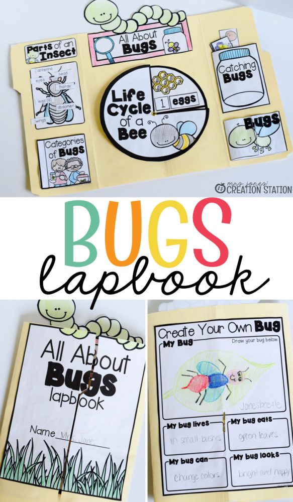 Bugs and insects Lapbook