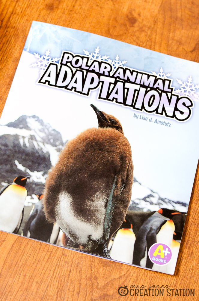 FREE animal adaptation observation printable for preschool and kindergarteners for winter units.