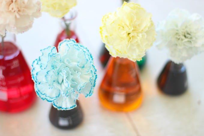 Spring Science Activities for Little Learners- Mrs. Jones Creation Station